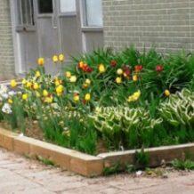 jardindesmaternelles.jpg